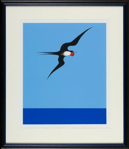 Pacific Frigate Bird